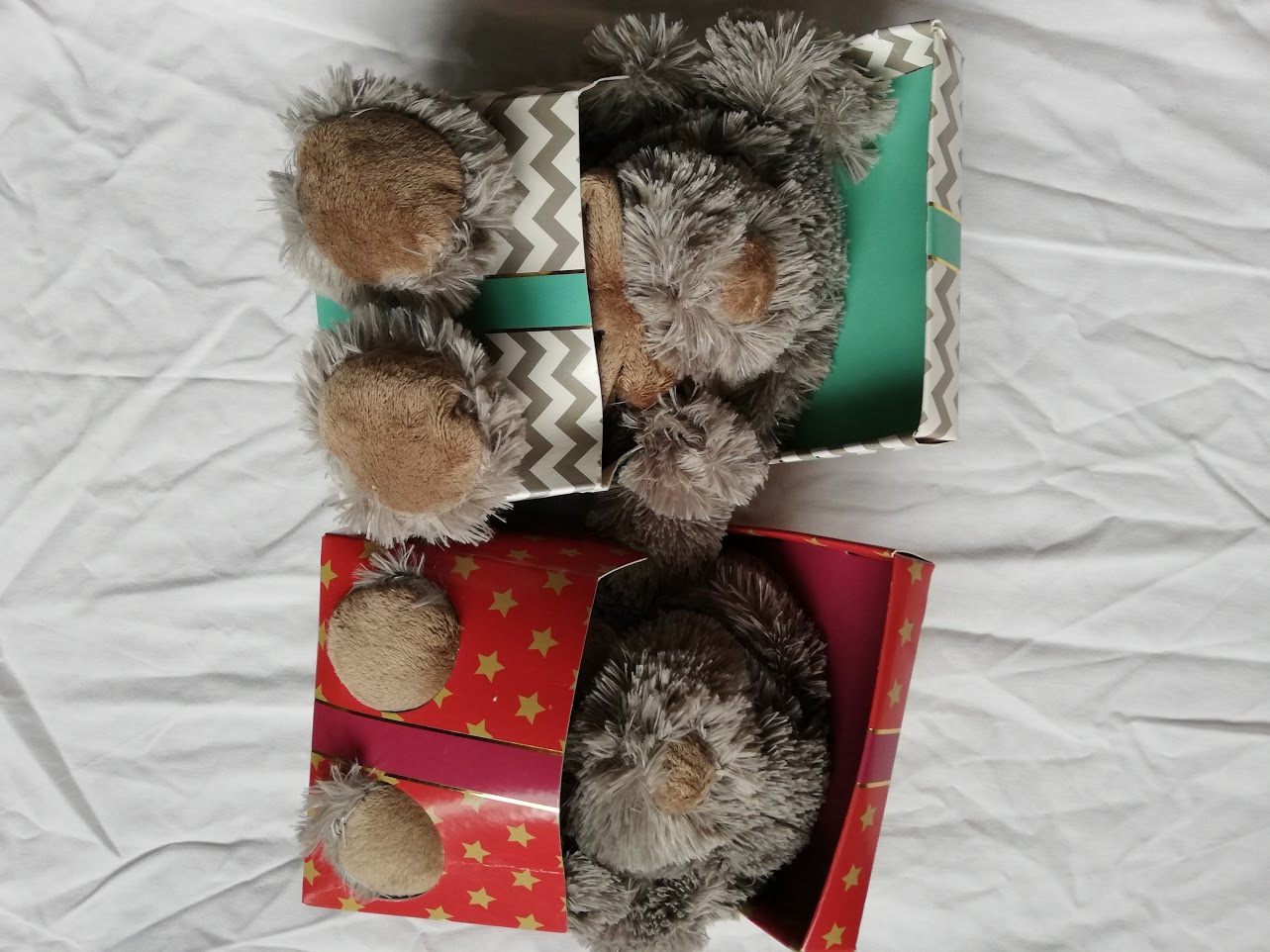 Christmas Gift - Teddy Dog in a box