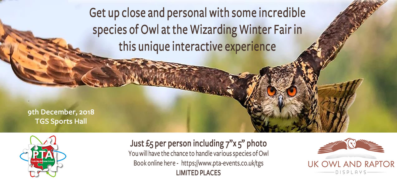Book an Owl Experience at The Wizarding Winter Fair.